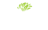 Avalon Fresh Logo